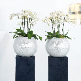fleur ami Disco Vase